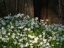 Kwiaty/Rośliny