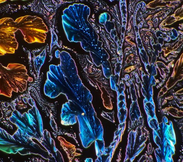 odczynnik-do-badania-wody-mikrofotografia-10